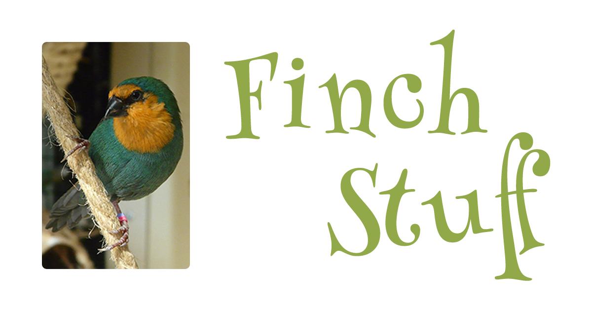 Finch calls, songs & sound clips   Finch Stuff